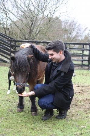 Feeding miniature pony