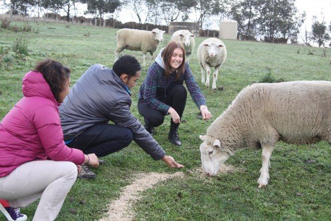 Feeding sheep (2)