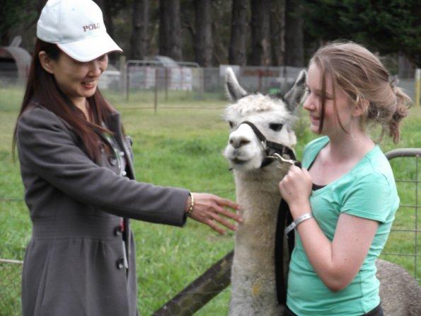 Guest patting alpaca