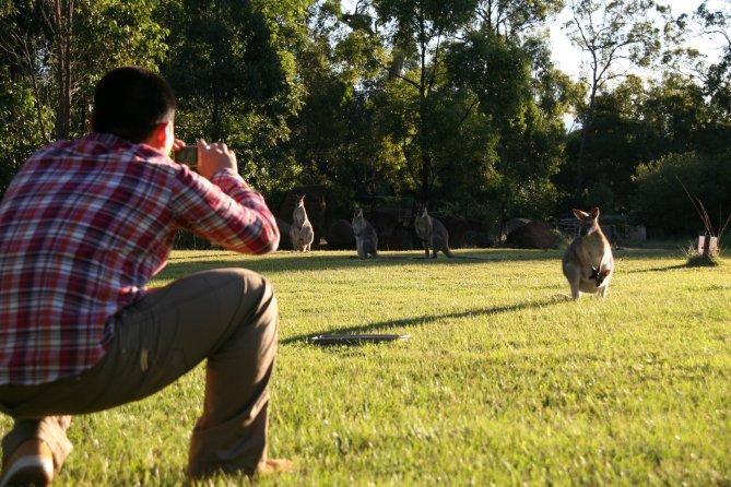 J student taking photo of kangaroo