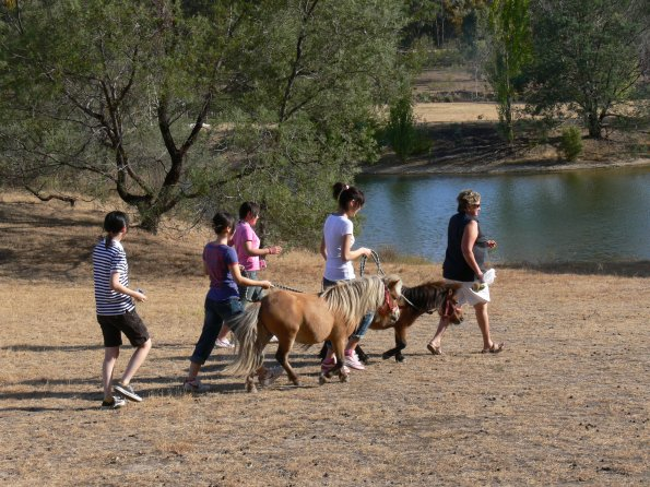 Students walking ponies