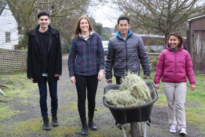 Wheelbarrow hay as group