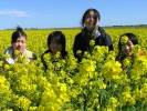Japanese students in canola field
