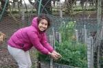 Looking at vegetable garden