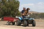 Quad bike with dog