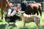 Student with dog and cattle